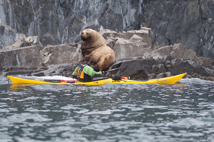 Kamchatka kayaking tour, Kamchatka sea kayaking