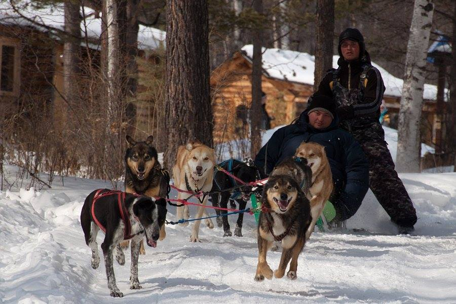dog sledding lake baikal