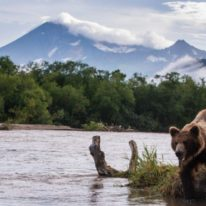 Kamchatka tour bears and volcanoes