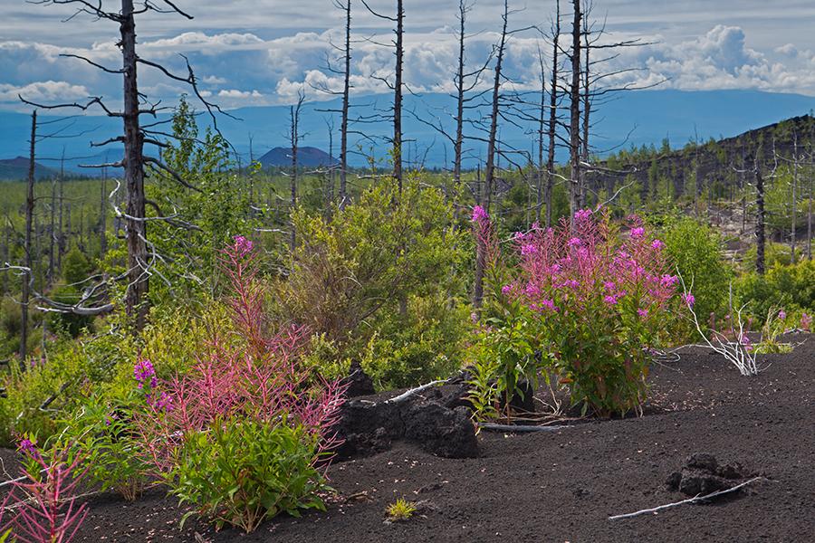Dead forest kamchatka
