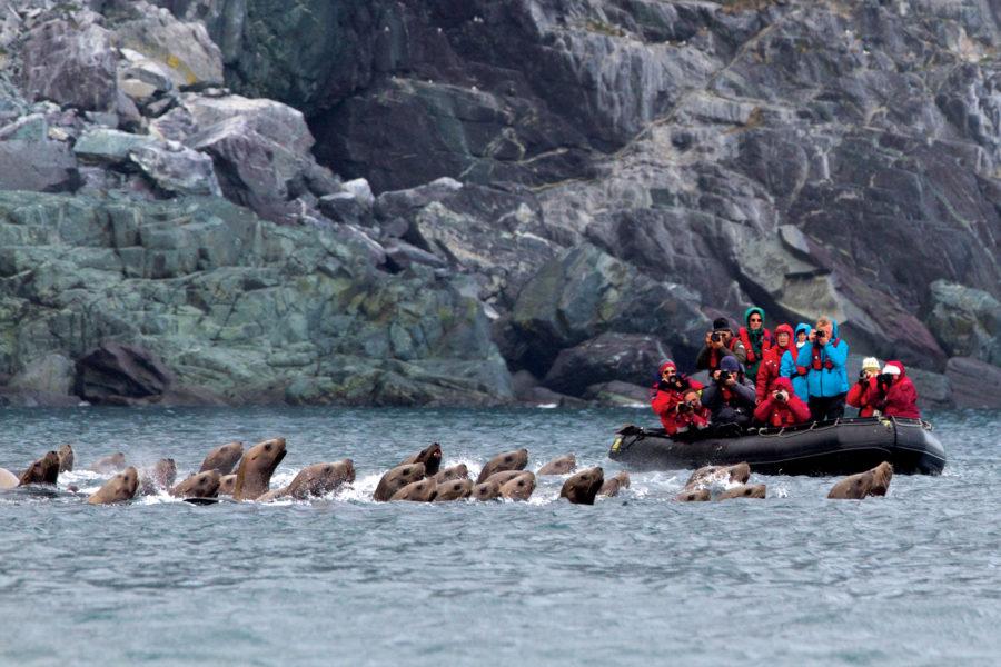 Wrangel Island expedition