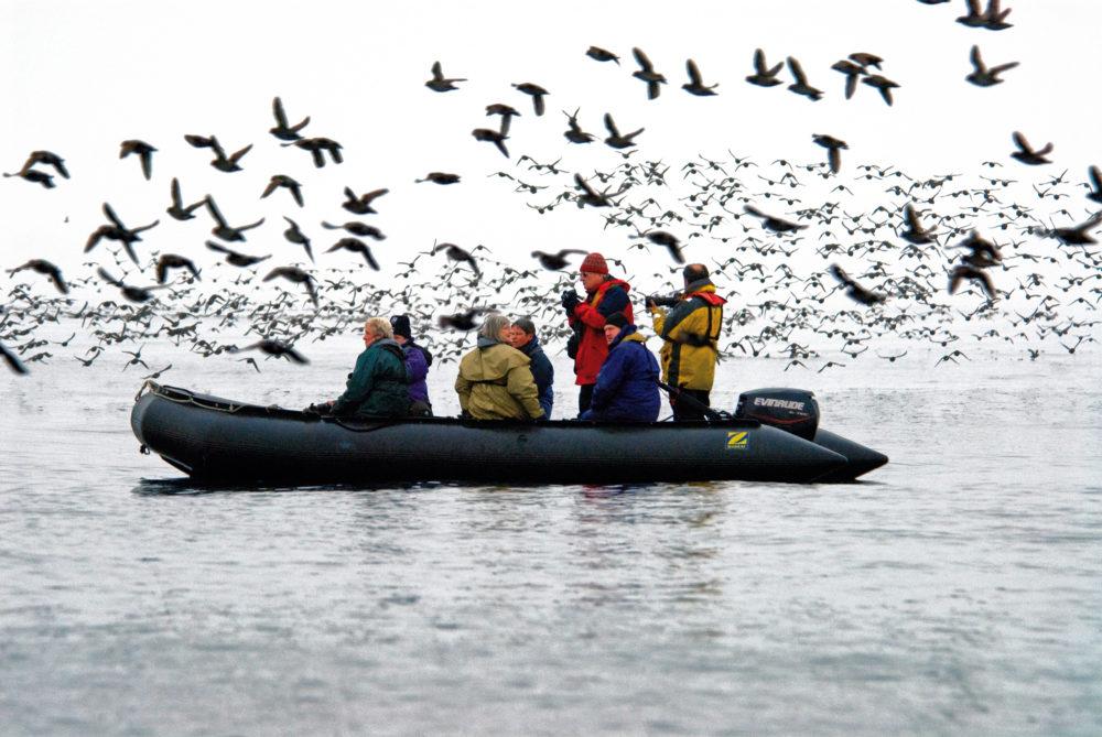 Wrangel Island bird spotting