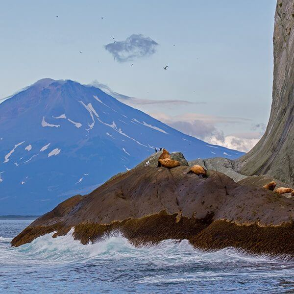 Kamchatka cruise wildlife