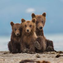 Kamchatka bears tour