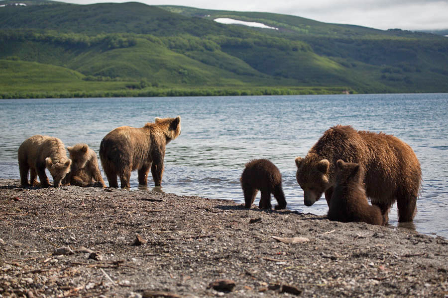 Bear family Kuril Lake