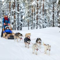 Dog sledding, trip to see Northern lights in Russia, Murmansk northern lights tour