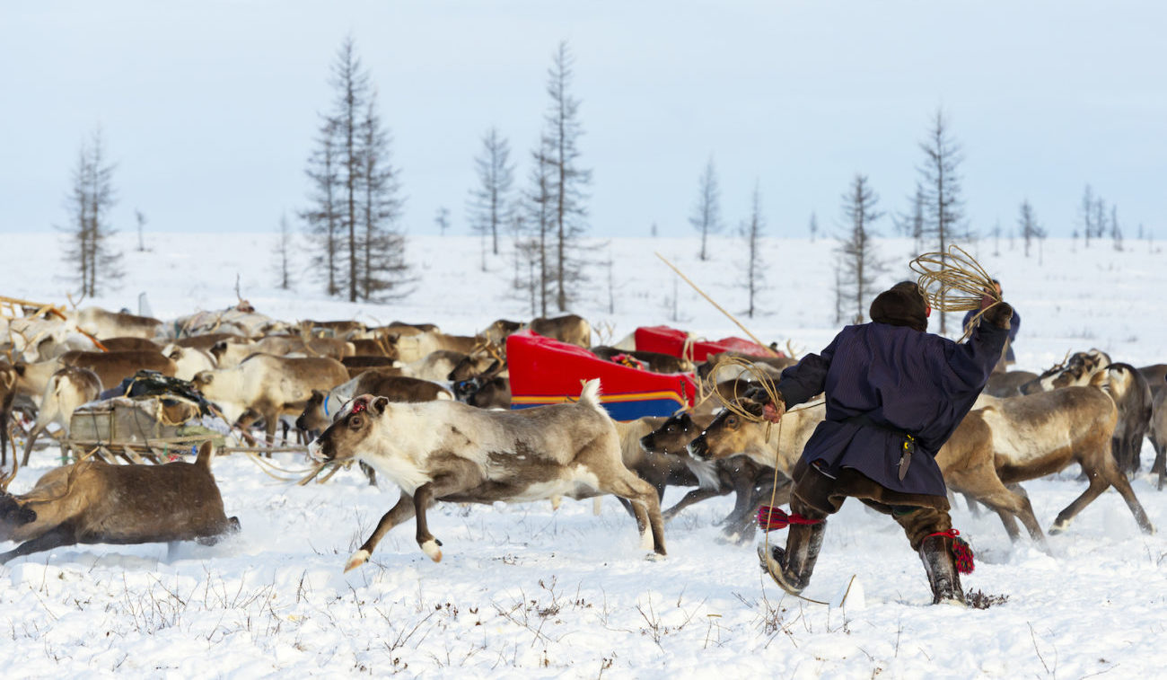 Reindeer herders migration Nenets of Yamal Peninsula, Russian Festivals
