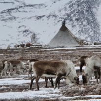 Yamal Reindeer migration Nenets tour Russia Siberia