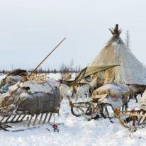 Yamal Reindeer migration Nenets tour Russia Siberia