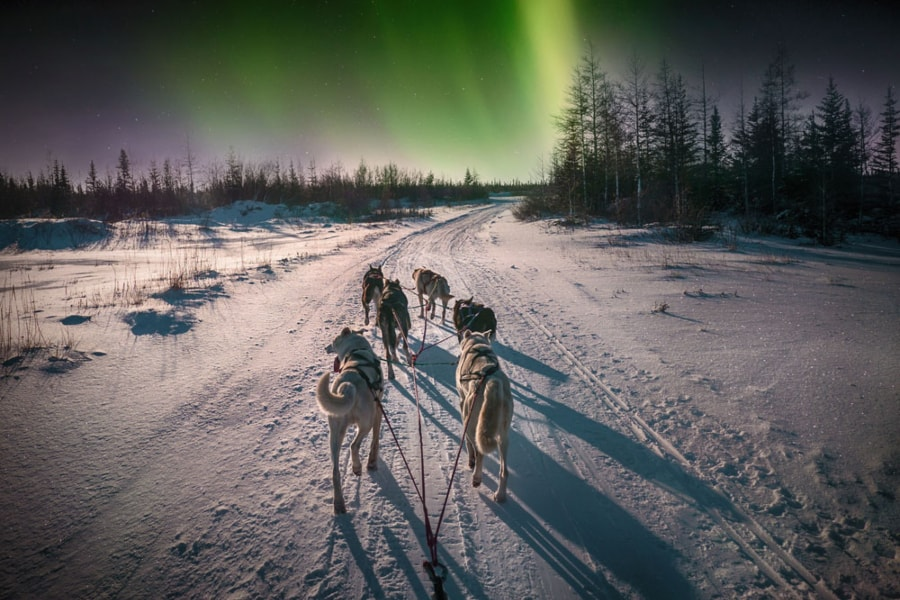 Northern Lights Murmansk tour Russia Kola Peninsula dog sledding